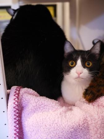 サンドウィッチ猫 空みるきぃ編_a0143140_083846.jpg