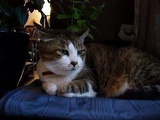 愛猫の死_d0237757_07535168.jpg
