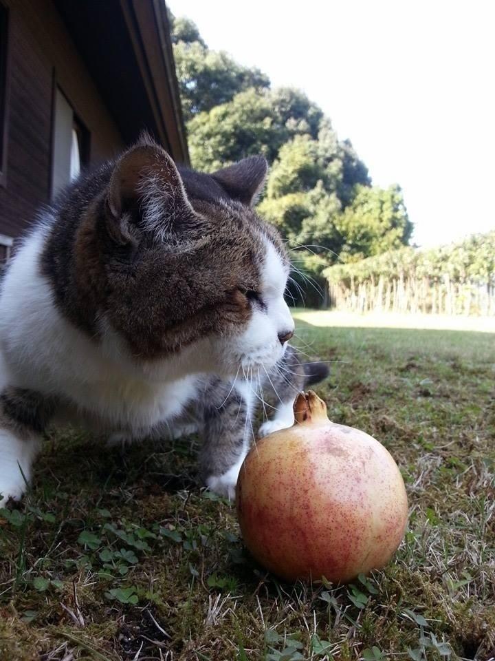 愛猫の死_d0237757_07560599.jpg