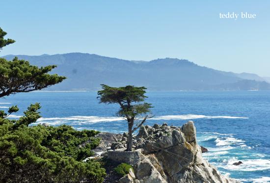 Monterey, CA  モントレー_e0253364_9141225.jpg