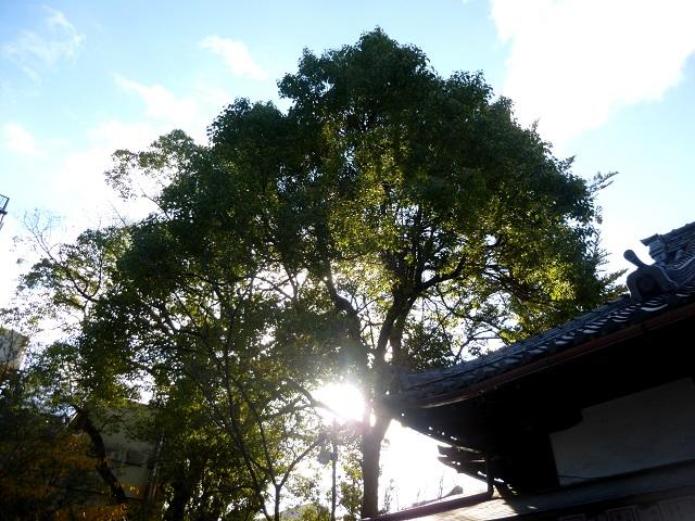 京都  (祇園から一乗寺へ むかう 編)_d0105967_21254160.jpg