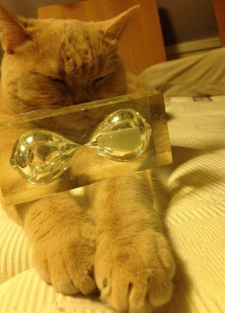 クリコも置き猫に!_c0108595_1245574.jpg