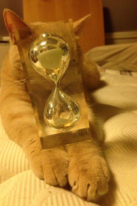 クリコも置き猫に!_c0108595_12465177.jpg