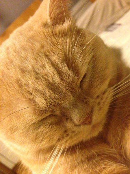 クリコも置き猫に!_c0108595_12481568.jpg