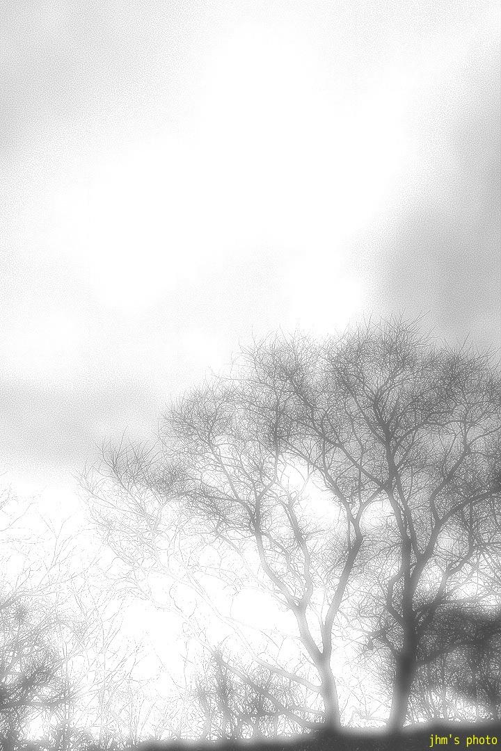 曇り空の冬の午前_a0158797_1151980.jpg