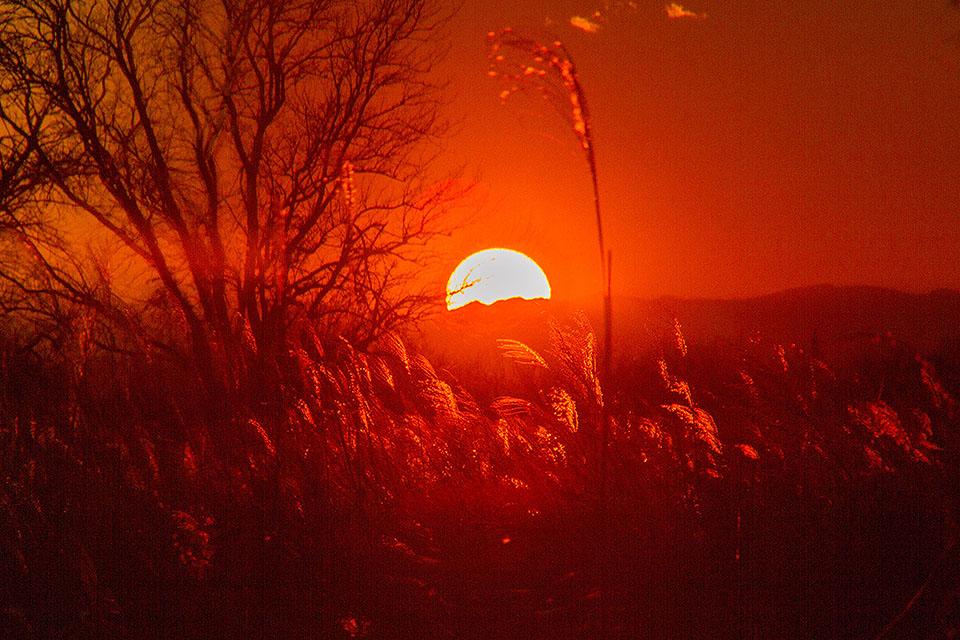 落日の輝き_b0010915_2111836.jpg