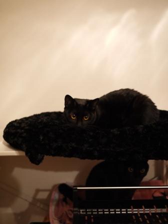 カメレオン猫 ぎゃぉすてぃぁら編。_a0143140_13374367.jpg