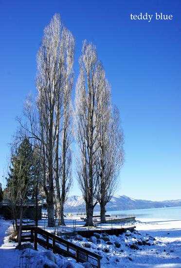 Lake Tahoe, CA  レイクタホ_e0253364_11313375.jpg