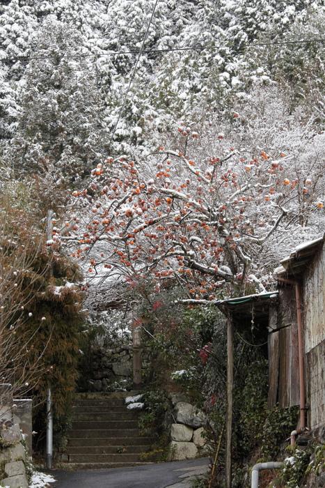 雪景色 2013 <大原>             _f0021869_23365988.jpg