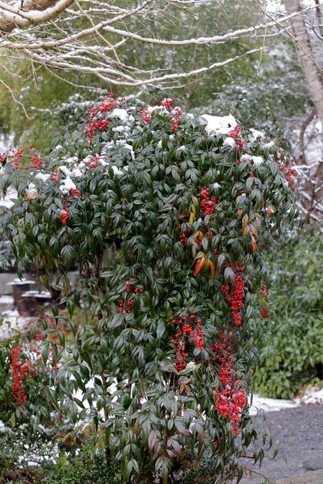 雪景色 2013 <大原>             _f0021869_23372628.jpg