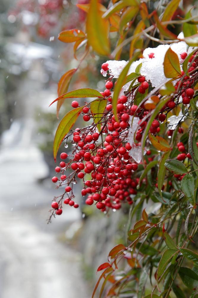 雪景色 2013 <大原>             _f0021869_23395430.jpg