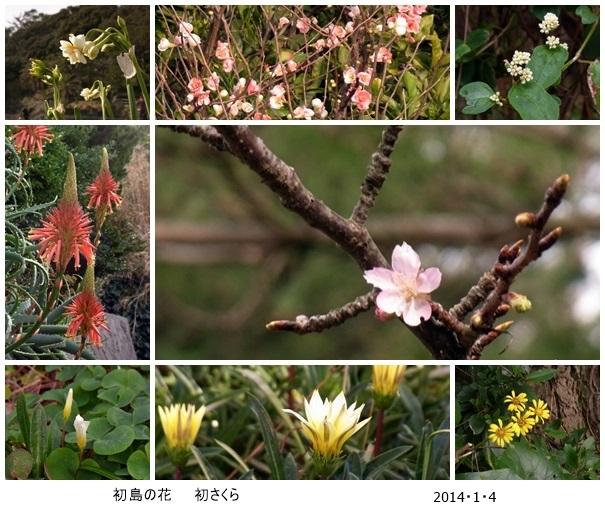 初春・初島・初詣 そして初さくら_c0051102_10404365.jpg