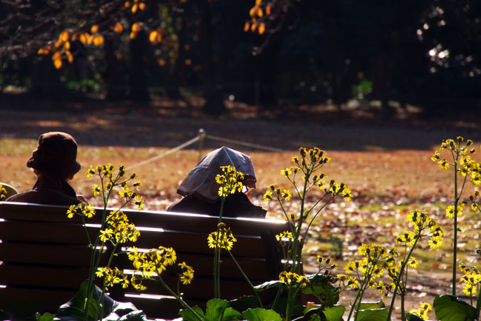新宿御苑の紅葉の盛り1_a0263109_1212441.jpg