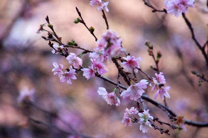 新宿御苑の紅葉の盛り1_a0263109_12125444.jpg