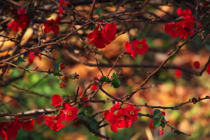 新宿御苑の紅葉の盛り1_a0263109_1213412.jpg