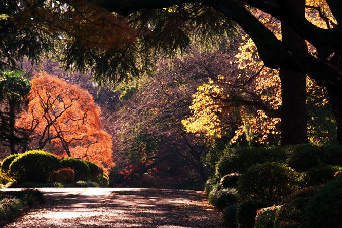新宿御苑の紅葉の盛り1_a0263109_12144538.jpg