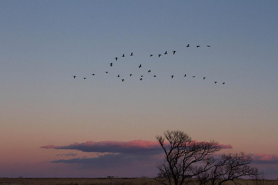 鳥たちの帰巣_b0010915_21531895.jpg
