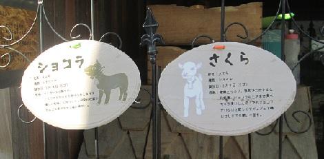 渋谷の街にヤギがいた!_d0183174_848564.jpg