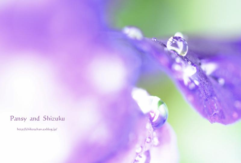 雨あがりのプレゼント♪_e0221779_13573393.jpg