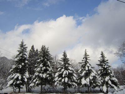 みそ作り体験と雪の森散策「くつきの森ビギナーズ+α」参加者募集中!!_f0212679_1451384.jpg