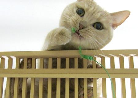 クリコ、はしご遊びで変顔www_c0108595_282316.jpg
