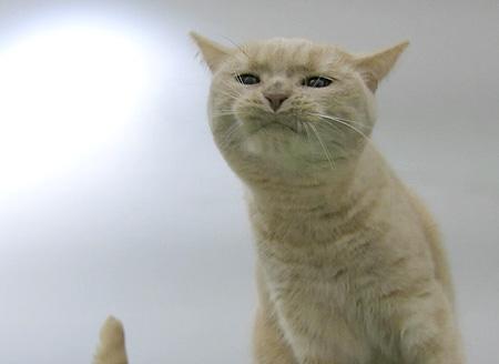 クリコ、はしご遊びで変顔www_c0108595_28313.jpg