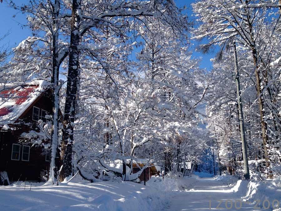 白い道♪_c0223095_11294797.jpg