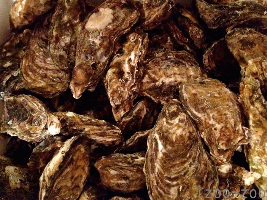 牡蠣、カキ、カキィ〜♡_c0223095_18175870.jpg
