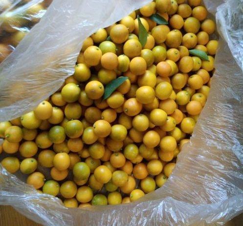 今年も金柑を収穫しました。。。_e0014000_16514410.jpg