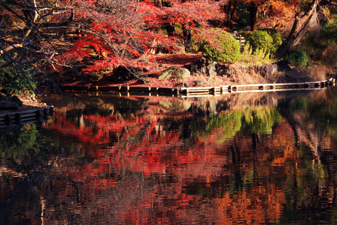 新宿御苑の紅葉の盛り2_a0263109_13353562.jpg