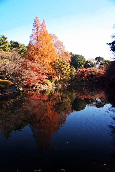 新宿御苑の紅葉の盛り2_a0263109_13354784.jpg