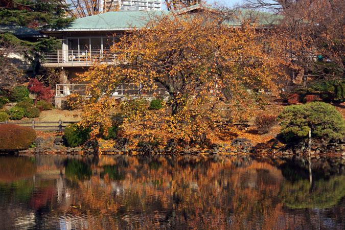 新宿御苑の紅葉の盛り2_a0263109_1335513.jpg