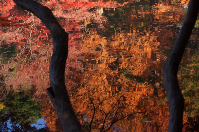 新宿御苑の紅葉の盛り2_a0263109_13363850.jpg