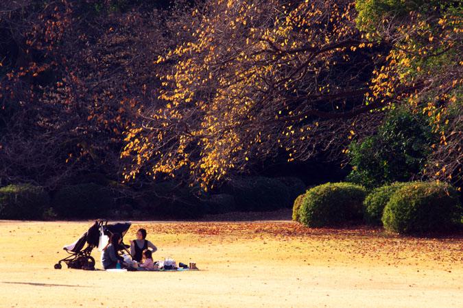 新宿御苑の紅葉の盛り2_a0263109_13385575.jpg