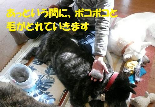 f0121712_6213860.jpg