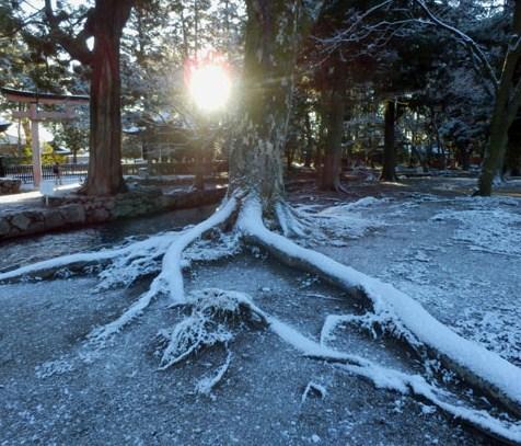 淡雪が 上賀茂神社_e0048413_18124352.jpg