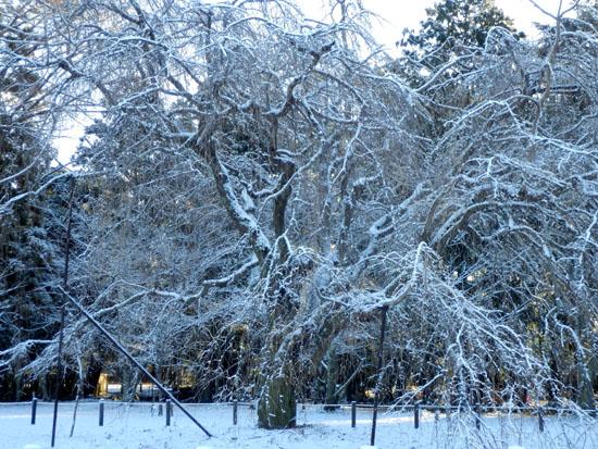 淡雪が 上賀茂神社_e0048413_18131521.jpg