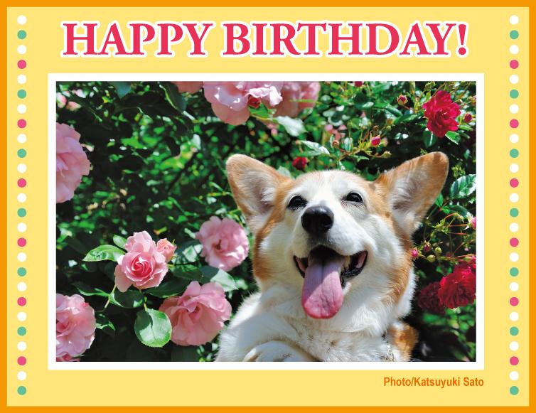 ケディちゃん、お誕生日おめでとう♪_d0102523_1421651.jpg