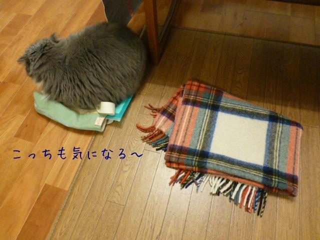 敷物好き_e0237625_1657587.jpg