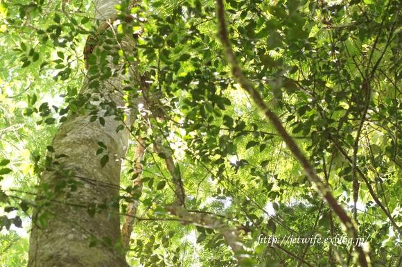 コスタリカへ(1) Rainforestを歩く_a0254243_8422865.jpg