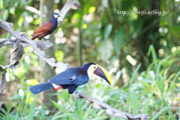 コスタリカへ(1) Rainforestを歩く_a0254243_845546.jpg