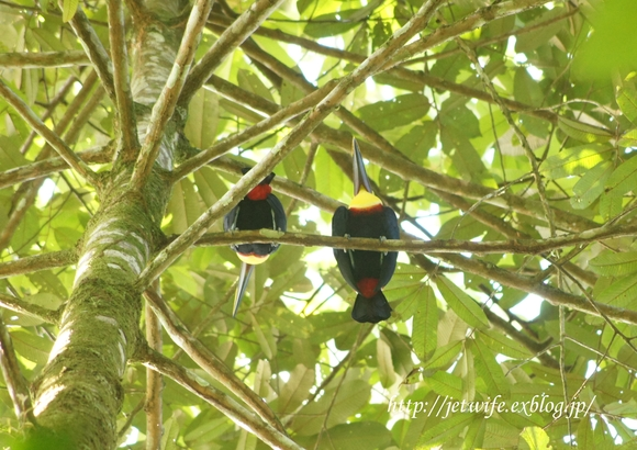コスタリカへ(1) Rainforestを歩く_a0254243_851129.jpg