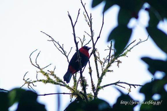 コスタリカへ(1) Rainforestを歩く_a0254243_8564275.jpg