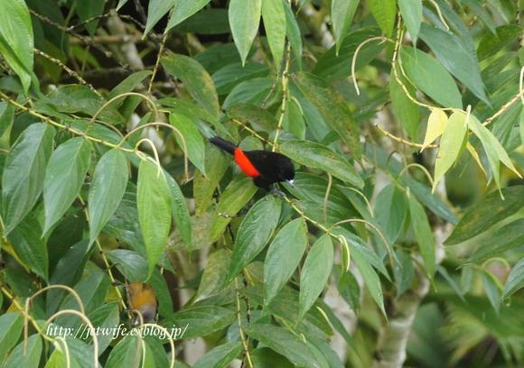 コスタリカへ(1) Rainforestを歩く_a0254243_911886.jpg
