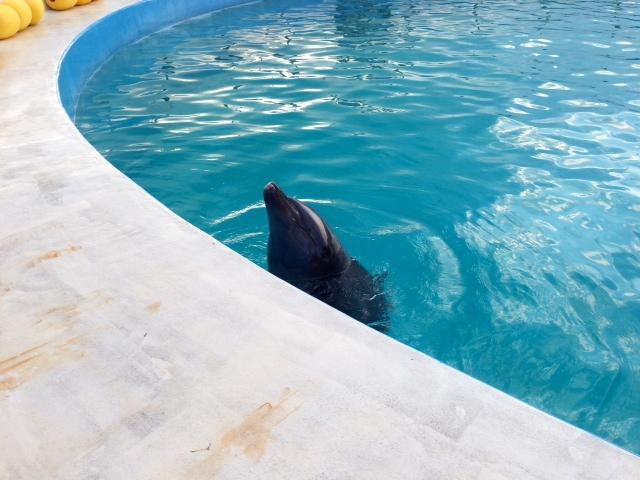 イルカ しっぽ を なく した