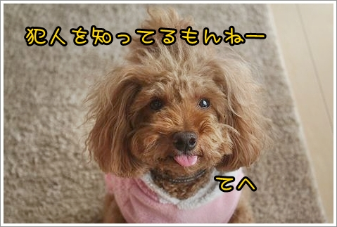 b0111376_1572087.jpg