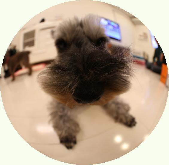 the dog風の写真、とっちゃった!!!!_c0245679_22215722.jpg
