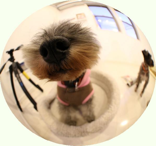 the dog風の写真、とっちゃった!!!!_c0245679_22241657.jpg