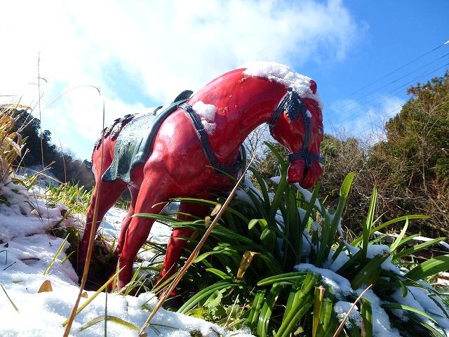 目覚めたら雪景色でした_c0165589_9541689.jpg
