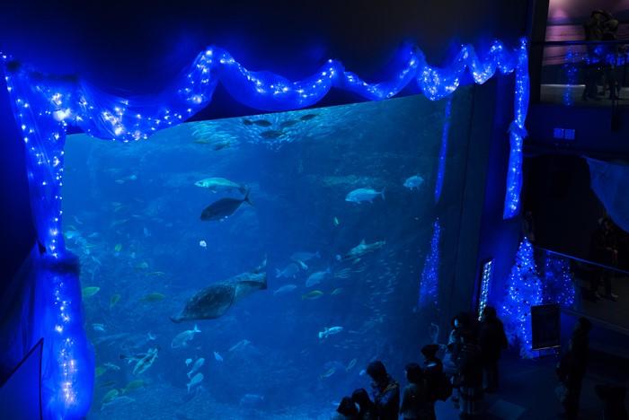 メリークリスマス in 新江ノ島水族館 2013_b0145398_2125279.jpg